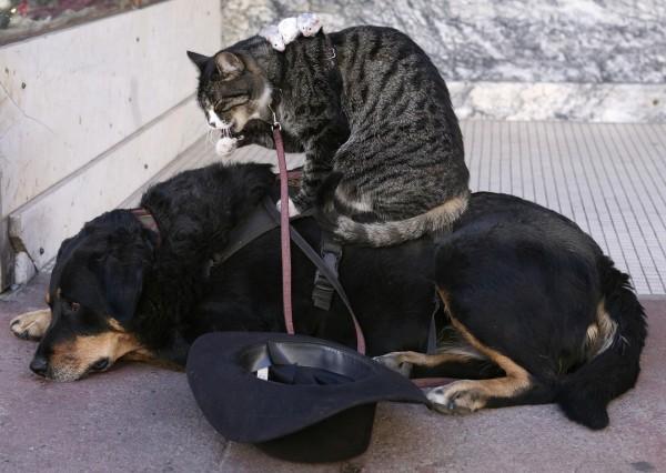 國際研究發現,狗比貓還要聰明。(路透)