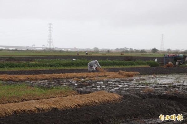 蘭陽溪兩旁高灘地,有許多農民種植作物。(記者林敬倫攝)