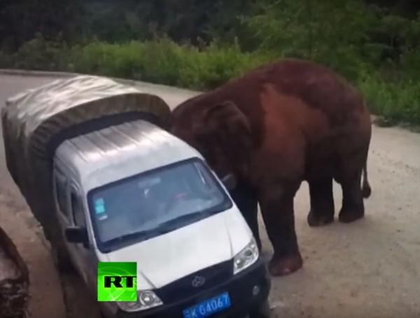 野象後來將目標轉移到後方貨車,牠走到貨車旁,試圖將貨車推倒。(圖擷自《今日俄羅斯》YouTube)