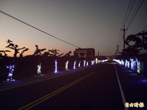 羅漢松大道夜間點燈後的美景。(記者詹士弘攝)