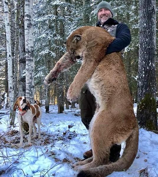 加拿大戶外節目主持人史蒂夫(Steve Ecklund),在臉書上PO出他獵殺美洲獅,甚至「炒獅肉」來吃的照片,引發正反兩極評論。(翻攝自網路)