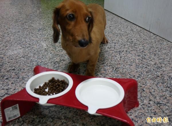 一名女網友表示,自己網購一包479元成犬飼料,想捐贈給狗園,卻被對方以「太少」為由拒絕,讓她覺得「莫名其妙」。示意圖。(資料照,記者劉曉欣攝)