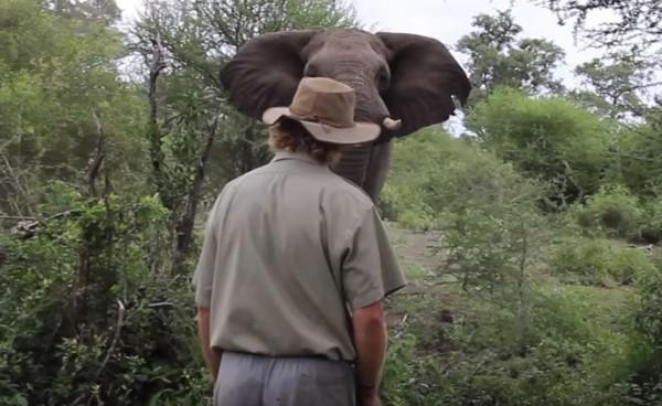 南非克魯格國家公園一名負責導覽的男子,在園區遇見一隻野生大象突然朝他暴衝而來,做出要攻擊的態勢。(圖擷取自YouTube)