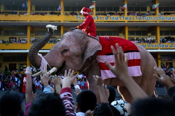導遊慘遭大象踩死,家屬拒泰象園賠償,圖為示意圖。 (路透)