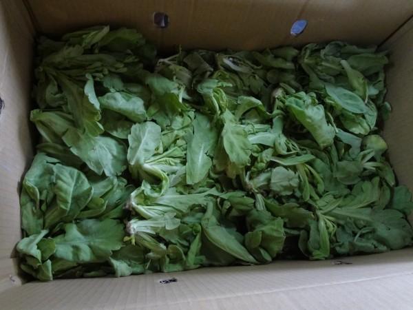 北市第一及第二果菜批發市場週邊聯合稽查結果出爐,1件「茼蒿」含超標1.4倍殺菌劑亞托敏。(衛生局提供)