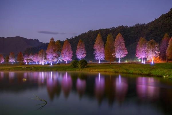 員山福園蜊埤落羽松增設燈飾,在夜間點燈。(圖由石姓攝影老師提供)