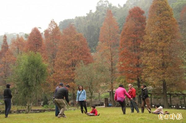 新竹縣新埔鎮箭竹窩社區內的落羽松林前方一片青青草地,是當地社區居民親子滑草的好地方,也免費開放給遊客入內拍照、打卡、一起滑草。(記者黃美珠攝)