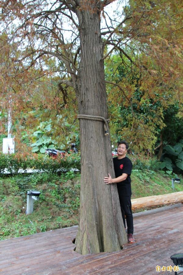 何信賢說,他的落羽松景觀園林中,如圖胸徑超過100公分的落羽松就有2棵,外面難得一見。(記者黃美珠攝)
