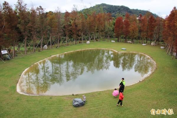 新竹縣關西鎮的落羽松秘境,但每個整點都總量管制,僅供200人慢遊。(記者黃美珠攝)