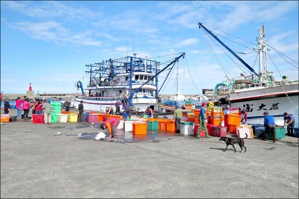 冷凍魚貨整理以件計算,整理人員大多採日薪制。(資料照)