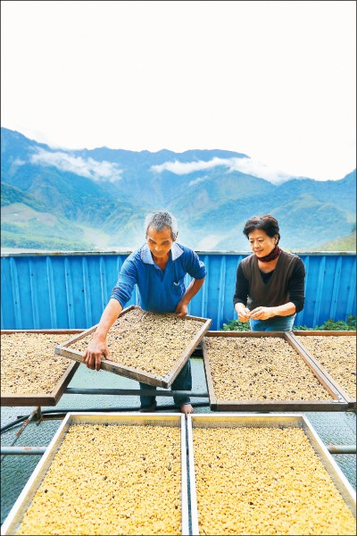 神谷山莊園僅有園主張瑞宏夫婦在照料,兩人一起研究種植,讓莊園的咖啡也能與嘉義、雲林等知名產區一較高下。(記者李惠洲/攝影)