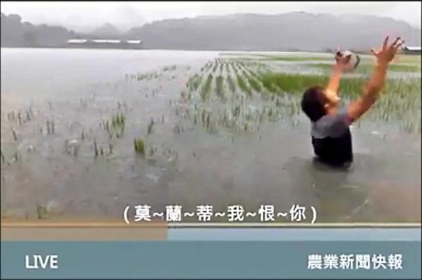 花蓮農民謝銘鍵的稻田出現劃分水利會灌區內外的「一田兩制」,灌區外農田淹水無處求助,一度只能拍影片自嘲喊苦。(資料照,記者花孟璟翻攝)