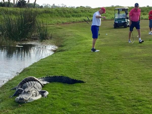 理查德表示,「我們開車到洞口,看了下這兩隻動物,拍了照片,繼續打我們的高爾夫球。」(圖取自Richard Nadler臉書)