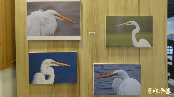 張德謙牧師的白鷺鷥作品正在台灣教會公報社台南總社展出。(記者劉婉君攝)