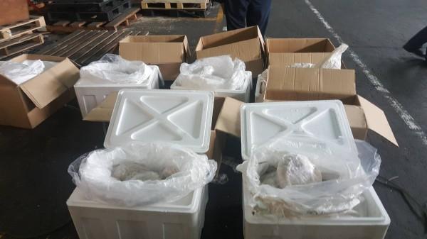 高雄關在貨櫃內查獲大量穿山甲屠體。(記者洪臣宏翻攝)