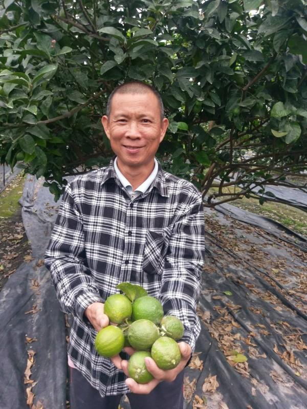 鹽埔鄉農友洪正雄友善耕種檸檬。(記者羅欣貞翻攝)