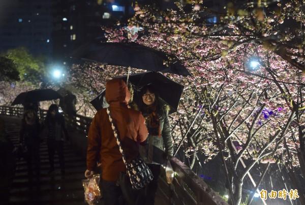 2018樂活夜櫻季3日開幕,燈光照亮動人櫻花,點亮東湖樂活公園。(記者簡榮豐攝)