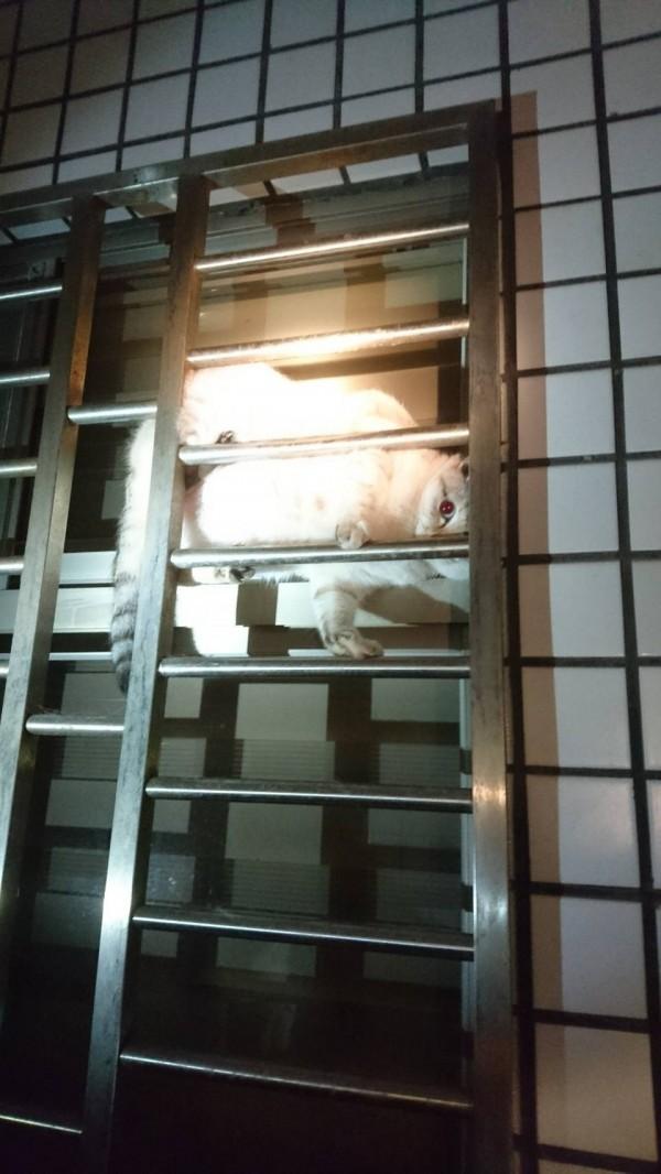 雲林縣特搜隊花蓮國盛六街2號大樓發現卡在鐵窗小貓。(記者林國賢翻攝)