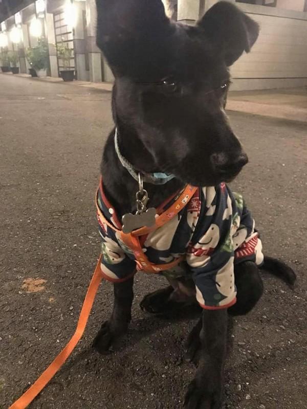 網友的愛犬似乎能感知地震,救了飼主一命。(圖取自《爆料公社》)