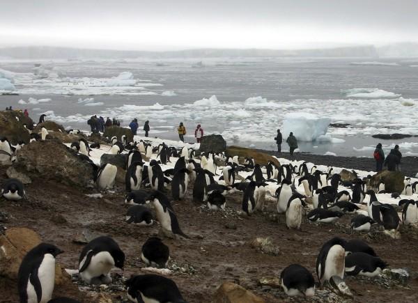 中國官方日前下令禁止遊客造訪南極時摸企鵝與亂丟垃圾。圖為2005年遊客造訪南極時觀賞企鵝。(美聯社檔案照)