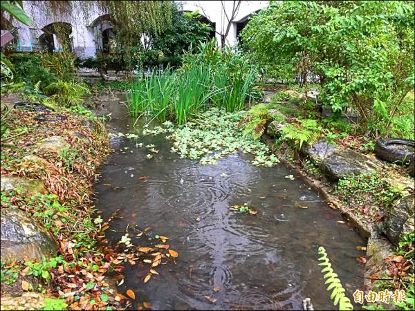 清水國小校園內打造生態池,將自然課程融入生活一環。(記者邱書昱攝)