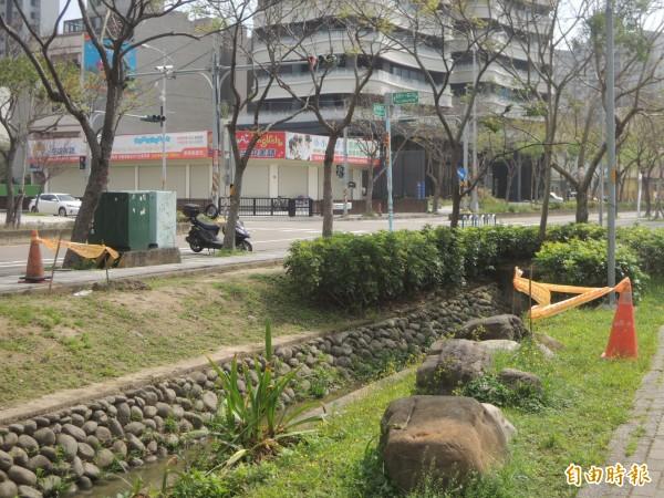 竹北市東興國小前的綠帶上,民眾通報至少3處疑似紅火蟻蟻丘,已圈圍警示。(記者廖雪茹攝)