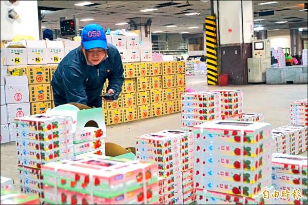 劉乃禎為剛到貨的草莓裁價(記者蕭婷方攝)
