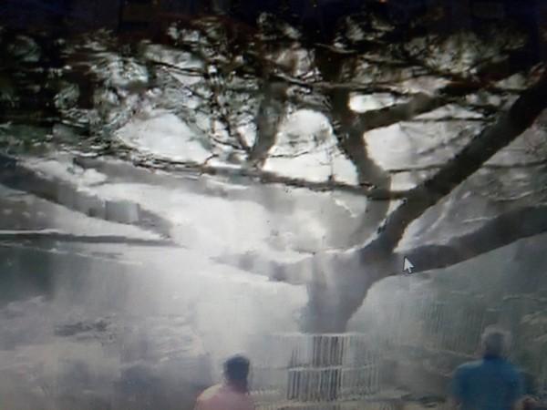 朝崑宮松樹樹蔭撒下水氣,煙霧迷濛,網友指稱神蹟。(記者張軒哲翻攝)