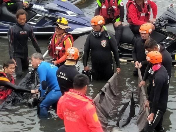 3隻小虎鯨成功打撈上岸。(記者蔡清華翻攝)