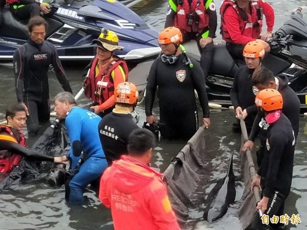 昨日高雄港受救的3隻小虎鯨,搶救仍不治。 (資料照)