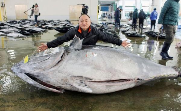47歲的船長大橋勇次與破紀錄的450公斤超大型黑鮪。(圖擷自《產經新聞》)