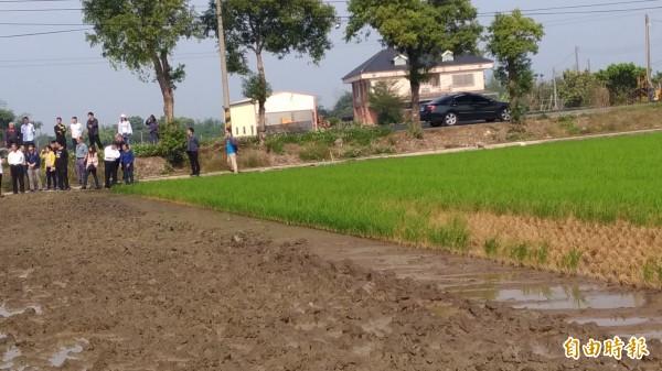緊鄰施工中工地的農田秧苗枯死。(記者廖淑玲攝)