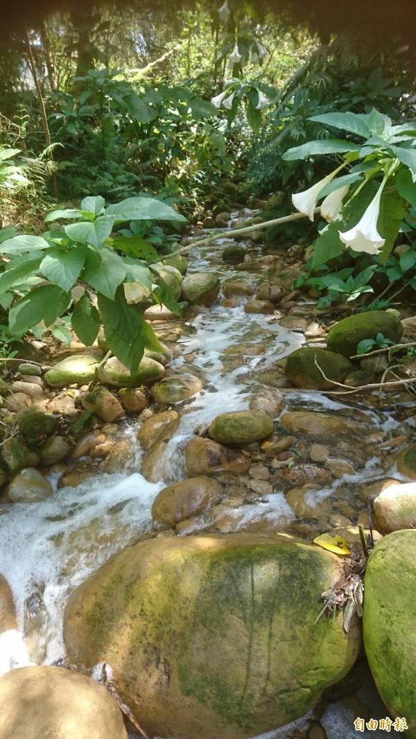 關西鎮大同里水坑溪出現白色泡沫充斥水面的污染事件,地方把矛頭指向上游的半導體工廠。(記者黃美珠攝)