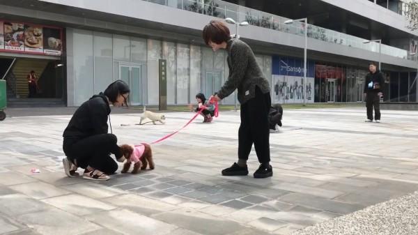 寵物訓練師香菇(右)教大家如何有效訓練愛犬。(圖片由完美狗狗訓練師-香菇 Mushroom(台南)授權提供使用)