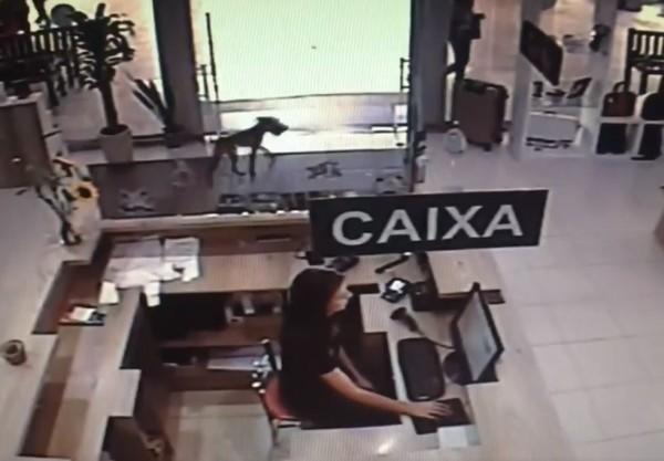 巴西一隻流浪犬,日前大搖大擺晃進書店,趁店員不注意,偷偷叼走架上一本書,書名竟是《被遺棄的日子》。(圖翻攝自臉書粉專「Infinity Livraria」)