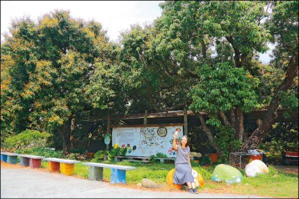兩棵樹齡超過160年的荔枝老樹,是圓林仔社區的著名地標。(記者李惠洲/攝影)