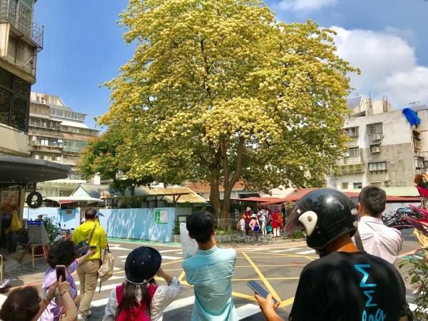 四月為台電魚木黃白花季,吸引不少民眾來此賞花拍照。(台電提供)