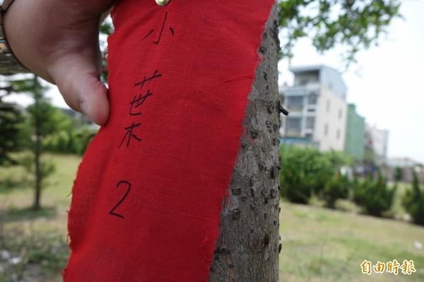 鹿港溪沿岸的樹木釘上紅布條名牌,有樹名與編號。(記者劉曉欣攝)