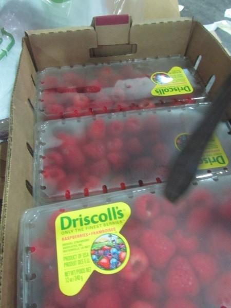 遭驗出農藥超標的這批覆盆莓已全數退運或銷毀,並未流入市面。(圖取自衛生福利部食品藥物管理署)