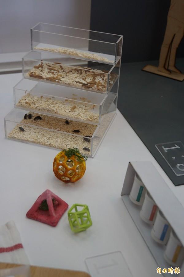 學生所設計的麵包蟲飼養模組,以及以食物列印機列印出來的蟲蟲食品。(記者詹士弘攝)