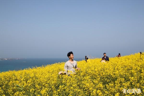 登上犀牛峰,可站在油菜花海中,拍出海天一色的「三色」美照。(記者陳怡君攝)