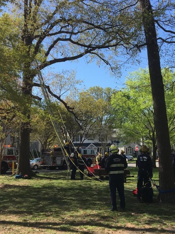 美國佛州男子爬樹救貓,結果和喵星人一起卡在樹上。(圖擷自Norfolk Fire-Rescue推特)