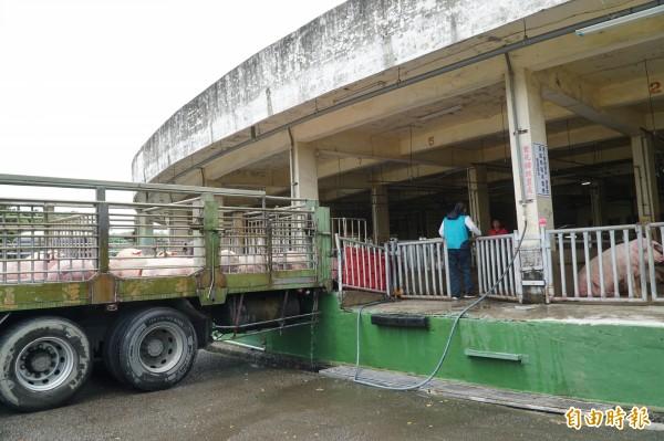 主要從事拍賣與電宰豬隻的新竹肉品市場,對一般民眾來說十分陌生。(記者廖雪茹攝)