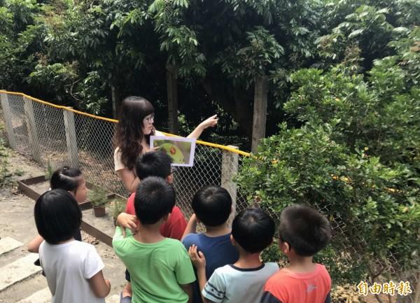 文德國小老師為學生解說荔枝椿象生態習性及有毒液體對人體傷害的認識,宣導「不抓、不碰」以避免學生受傷。(記者湯世名攝)