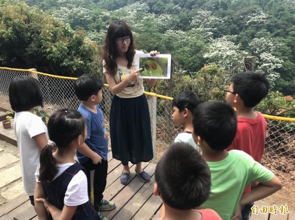 文德國小老師為學生解說荔枝椿象生態習性及有毒液體,宣導「不抓、不碰」以避免受傷。(記者湯世名攝)
