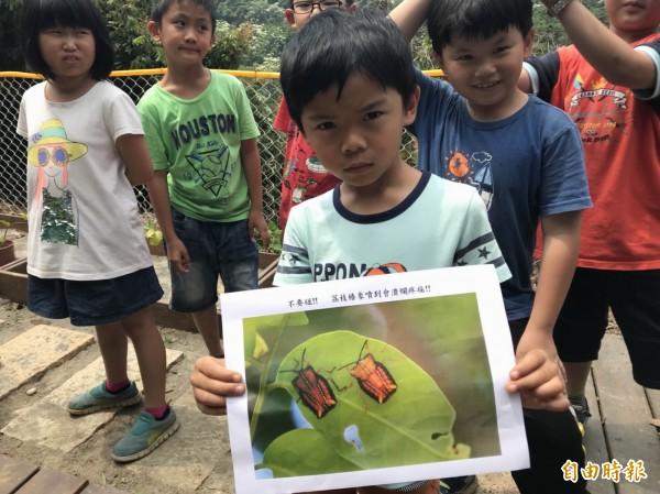 文德國小學生們都了解荔枝椿象生態習性及有毒液體,「不抓、不碰」以避免受傷。(記者湯世名攝)