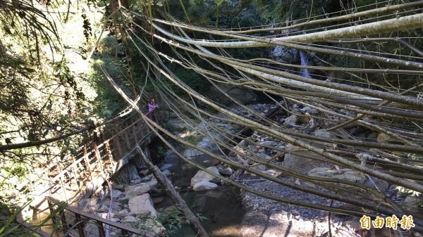 南投信義東埔溫泉區管線問題成為景觀殺手,到彩虹瀑布的路上可見大量水管凌空而過。(記者劉濱銓攝)