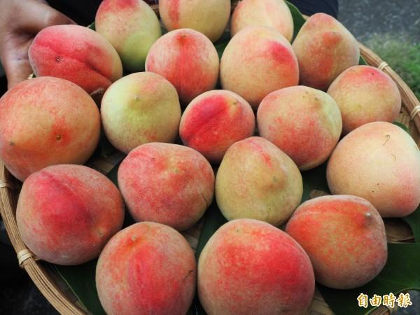 今年台東熱帶水蜜桃雖然果粒偏小,甜度卻很高。(記者王秀亭攝)