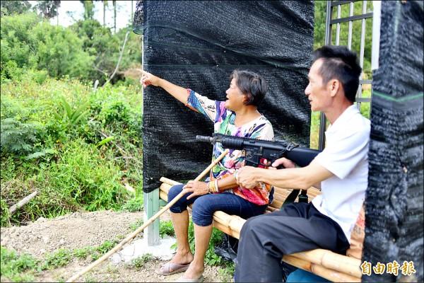 屏東縣滿州鄉農婦鍾英敏為了猴害,蓋哨所整天守在田裡,鄉代會主席莊期文帶bb槍前往支援。(記者蔡宗憲攝)