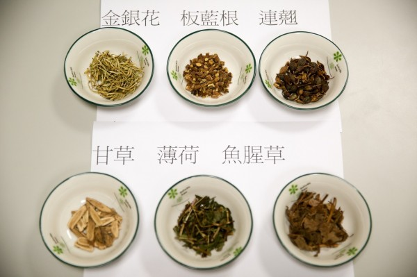 花蓮慈濟醫院中醫部建議夏天以清熱解毒利咽的金銀花茶提昇免疫力。(花蓮慈濟醫院提供)